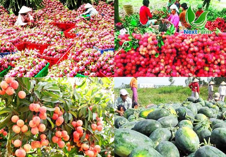 Truy xuất nguồn gốc thực phẩm bằng mã QR Code – Nông nghiệp thông minh